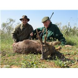 3-5 day red stag, mouflon sheep or roe deer hunt for two hunters in Spain - includes trophy fees