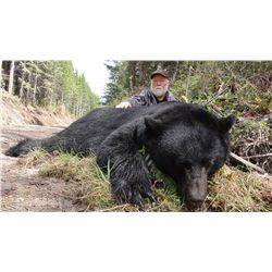 5-day black bear hunt for one hunter and one non-hunter on Vancouver Island - includes trophy fee