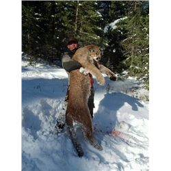 7-day cougar hunt for one hunter in British Columbia