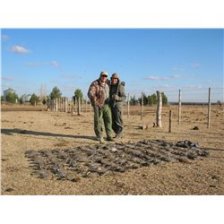 3-day high volume dove hunt for two hunters in La Pampa, Argentina