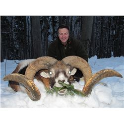 5-day European mouflon hunt for one hunter and one non-hunter in Austria - includes trophy fee