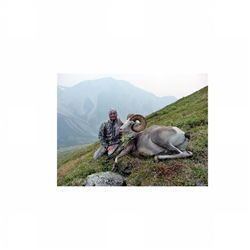 12-day stone sheep hunt for one hunter in the Yukon - includes trophy fee and taxidermy credit