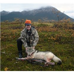 6-day Alaskan wolf hunt for two hunters - includes taxidermy for two full size wolves