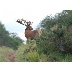7-day red stag, European wild boar, blackbuck and  dove hunt for two hunters in Argentina - includes