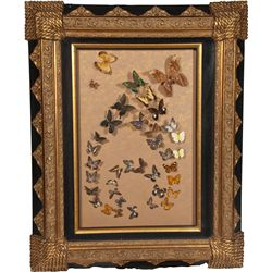 Large Glass Butterfly Display in Ornate Frame