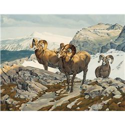 Bighorn Sheep by Metz, Dan