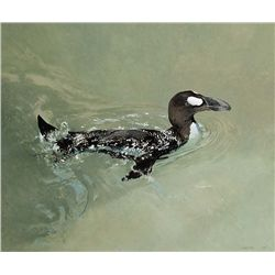 The Great Auk by Ching, Raymond H.