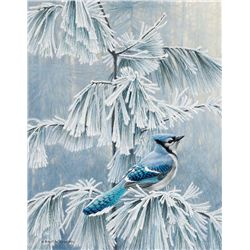 Frosty Morn Blue Jay by Bateman, Robert
