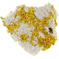 CA, Grass Valley-Nevada County-Rich Gold in Quartz - Empire Mine