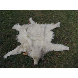 INDIAN WOLF SKIN CEREMONIAL THROW RUG OR HEADDRESS 1 WEARABLE FULL FAUX PELT WITH HEAD HAT