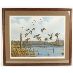 "Fine Art Print Depicting ""Mallards in Flight"""