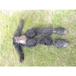 GORILLA APE MONKEY KING KONG FULL BODY COSTUME SUIT WITH FEET