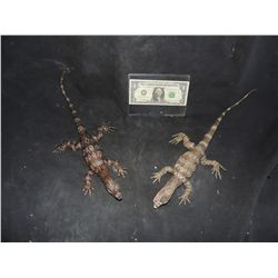 PAIR OF SILICONE LIZARDS FROM COMMERCIAL