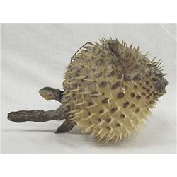Authentic Spiney Puffer Fish