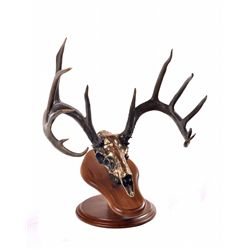 """Dream Buck"" - Bronze Sculpture by Artist, Justin Young"