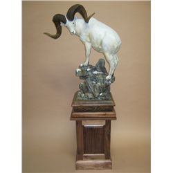 """Ivory King"" - Dahl Sheep Sculpture in Bronze By Sam Terakedis"