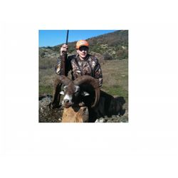 7-Day Mouflon Sheep Hunt for One Hunter and One Non-Hunter in Macedonia - Includes Trophy Fee