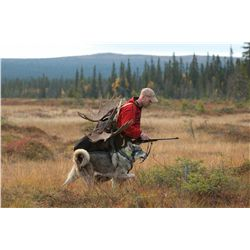 5-Day Traditional Driven Moose Hunt for One Hunter in Sweden - Includes Trophy Fee