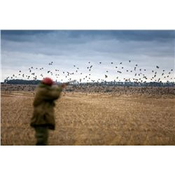 Five-Star, 4-Day/ 3-Night Dove Hunt in Cordoba, Argentina for 2 Hunters - Includes 6 Hunts