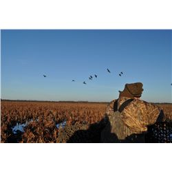 4-Night Mixed Bag Bird Hunt for Six Hunters in Uruguay