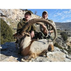 7-Day Bezoar Ibex Hunt for One Hunter and One Non-Hunter in Turkey - Includes Trophy Fee