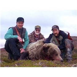 7-Day Brown Bear Hunt for One Hunter in Alaska