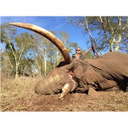 10-Day Trophy Elephant Bull Hunt for One Hunter in Zimbabwe