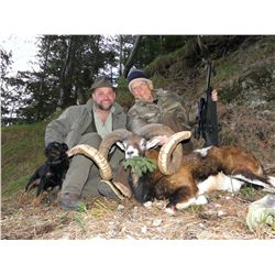 5-Day Mouflon and Wild Boar Hunt for One Hunter and One Non-Hunter in Austria - Includes Trophy Fees