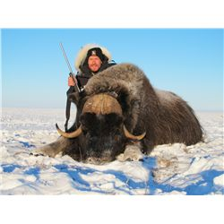 4-Day Greenland Muskox Hunt for One Hunter in British Columbia