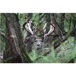 """FIRST WEEK OF THE SEASON"" Deer Hunt in Missouri For One to Five Hunters - Includes Trophy Fee Credi"