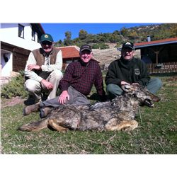 7-Day Balkan Chamois Hunt for 1 Hunter and 1 Non-Hunter in Macedonia - Includes Trophy Fee