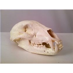 Tales from the Crypt Animal Skull Prop