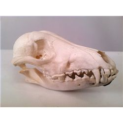 Tales from the Crypt Small  Animal Skull Prop