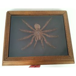 Tales From The Crypt Spider Prop