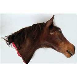 The Godfather Jack Woltz Bedroom Severed Horse Head Prop