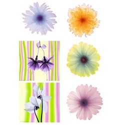 6) X-ray Photo Prints- Iced Bloom Lemon Nectar