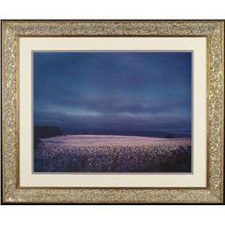 Flower Fields Art Photo Photograph Framed