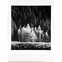 Gary Faye Aspens Trees Photo Poster Nature Print