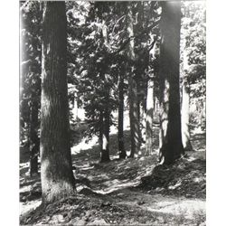 Black and White Photograph Print Wooded Trail
