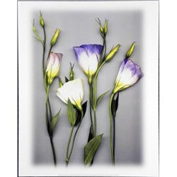 Bruce Brown Blue Lizzianthus Flower Art Print