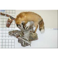 Hanging Full Mount  Red Fox & Squirrel