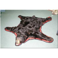 Black Bear Head Mounted Rug w/red & black trim, complete w/claws