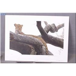 Medium Un-Framed Ltd Edition Print, Robert Bateman, Leopard at Seronera, # 438/950, Artist Signed 19