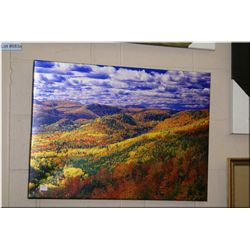 Daryl Benson limited edition giclee of Autumn tree tops 2/50