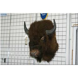 Small Bison Head Mount