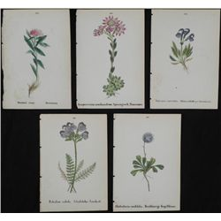 5 Antique Botanical Prints Pink, Blue Flowers German