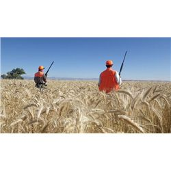 4-day/5-night Utah Pheasant, Chukar and Trout Adventure for One Hunter and One Observer