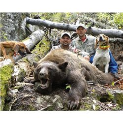 4-day New Mexico Black Bear Hunt for One Huner and One Observer