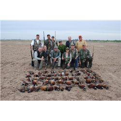 3-day Sonora Pheasant Hunt for One Hunter