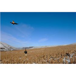 3 night/2 Full Days of Upland Wingshooting for 2 Guests